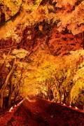 2018富士河口湖紅葉まつり(11月1日~11月23日)
