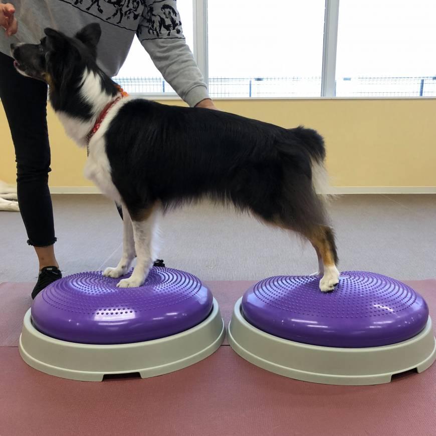 愛犬の無料体力テスト開催!
