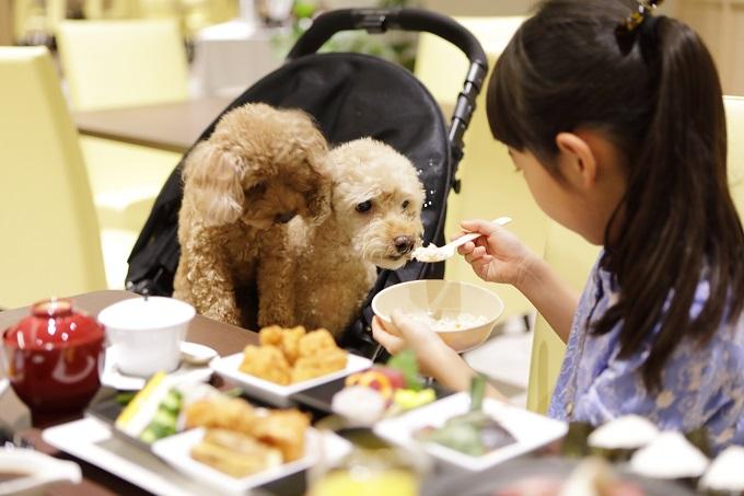 愛犬食事新メニュー登場!