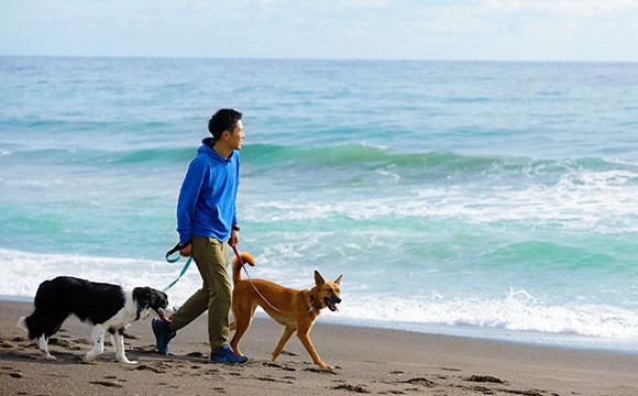愛犬と一緒 南房総 鴨川 愛犬と泊まれるホテル レジーナリゾート鴨川