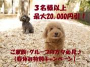 3名様以上最大20,000円引【春休みキャンペーン】のご案内