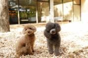 獣医師 徳永先生より≪愛猫及び愛犬の新型コロナウィルス感染対策≫について最新情報(4月6日時点情報)をご提供いただきました
