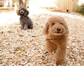 【1泊2食付】愛犬と過ごすくつろぎと贅沢時間/本格懐石