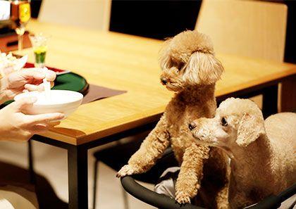 愛犬同伴のお客様へ