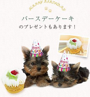 バースデーケーキのプレゼントもあります!