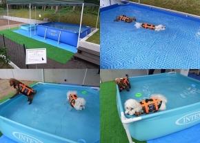 【愛犬用プールのご案内】