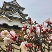彦根城の梅林(ひこねじょうのばいりん)