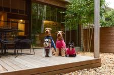フリーペーパー『Buddy Life』プロのカメラマンによる 愛犬撮影会のご案内